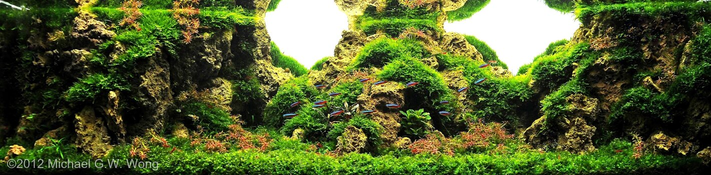 AGA 2012 Aquascaping Contest: #137